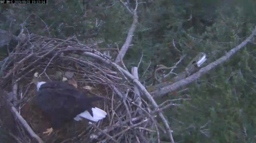 hm lady on the nest 7 13 sept 21 .jpg