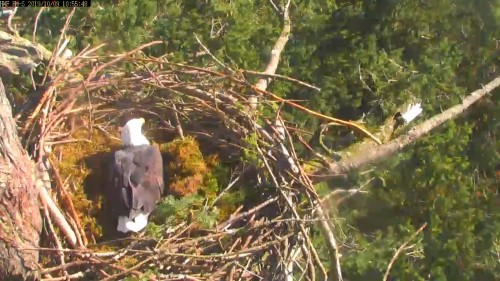 hm dad back testing the nest 10 55 oct 9 .jpg
