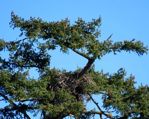 Deep Cove Winery Nest.JPG