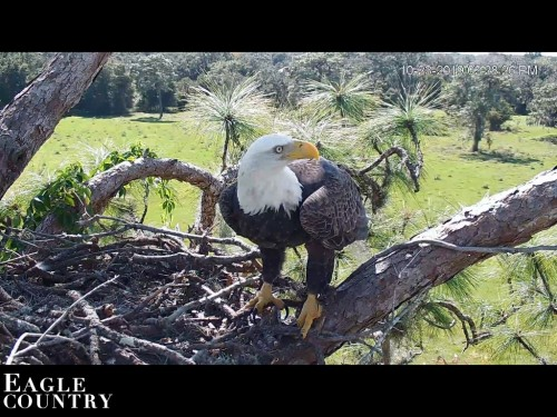 EAGLE COUNTRY 10 23 19 2 30 PM I THINK NIC.jpg