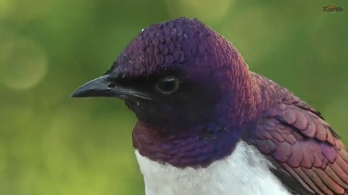 starling (2).png