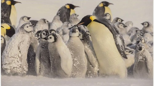 Penguins in the snow.jpg