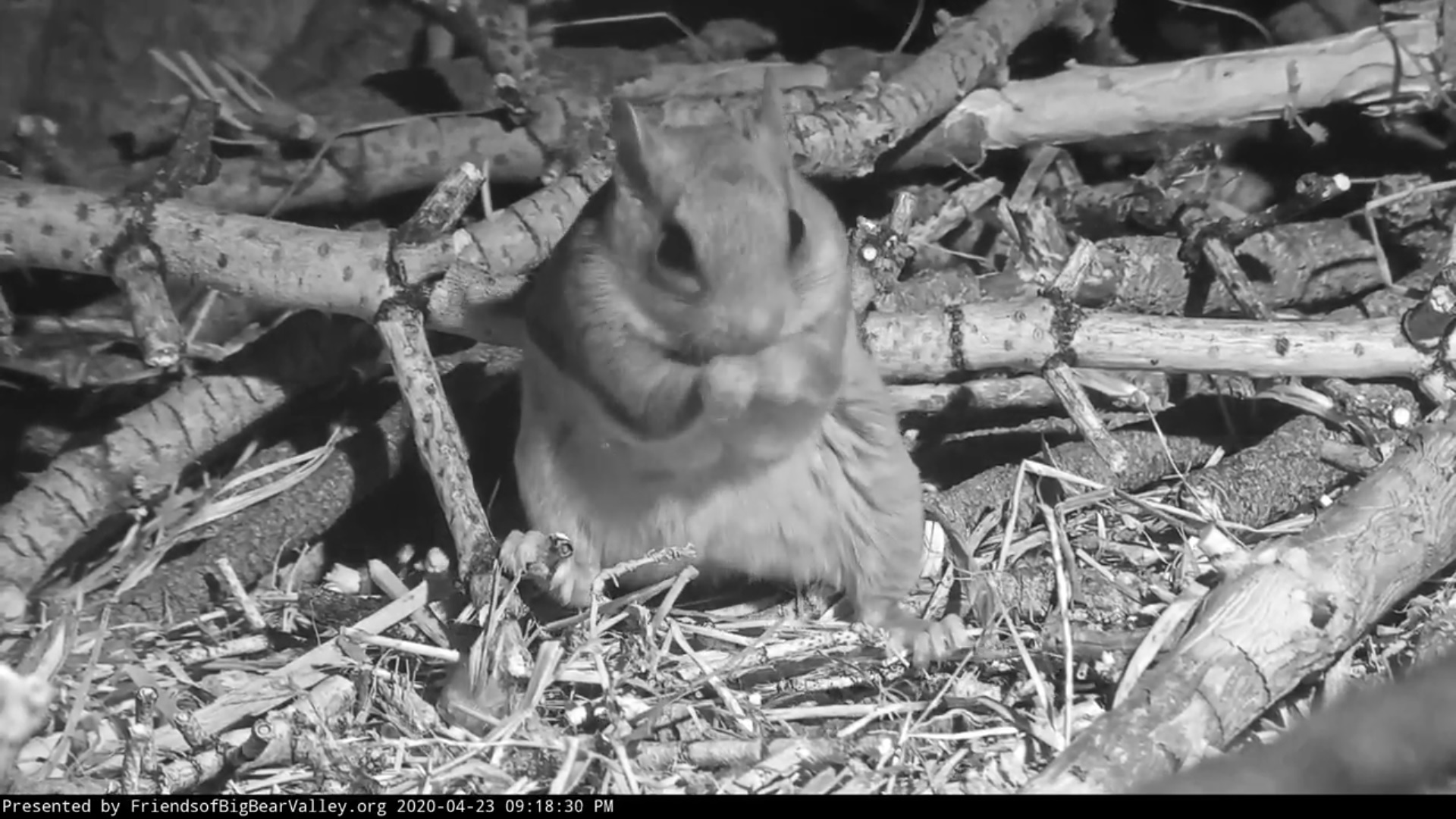 Big Bear Bald Eagle Nest Cam - Page 2 File
