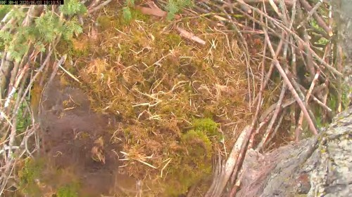 hm nest north cam 7 10 june 3 .jpg