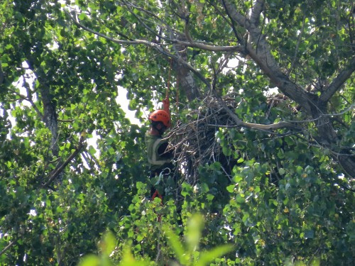 Phase 1-Eaglecam Project-Tree Climbers-6.jpg