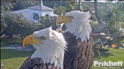 Harriet & M15, American Bald Eagle Cam - Page 2 File