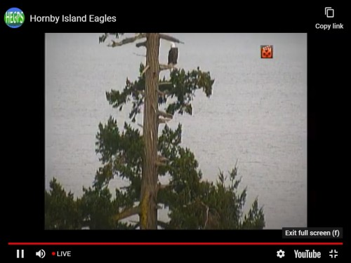 HORNBY EAGLES 11 23 2020 4 19 PM ADULT.jpg