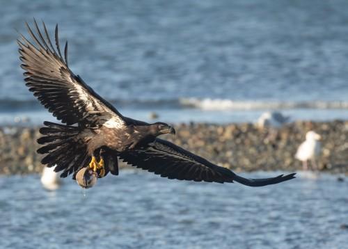 Eagle Horse clam Deborah Freeman.jpg