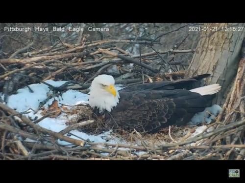 HAYS EAGLES 1 21 21 1 16 PM  MOM.jpg