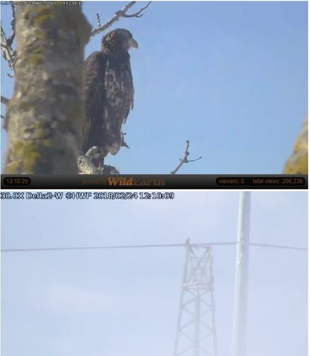 2018-02-24 15_10_20-Trio Bald Eagle Nest Cam -Live _ Stewards of the Upper Mississippi River Refuge .jpg