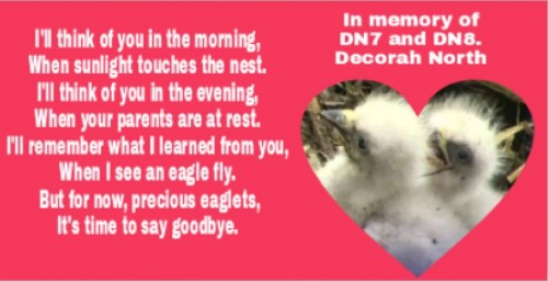 DNN tribute to the eaglets.JPG